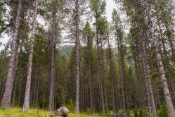 Bosques de la Serra d'Ensija.